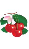Tabellina del 3 con le ciliegie